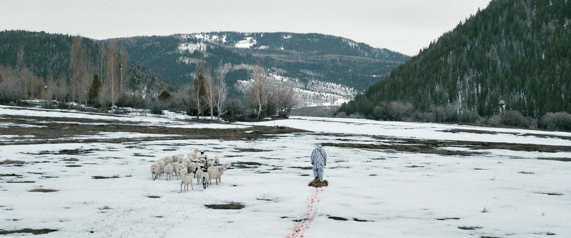 """Gorące napięcie w lodowatej scenerii – recenzja filmu """"Wind River"""""""